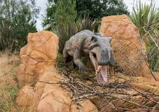 Gorgonopsid Sabre Toothed Dinosaur from the Permian Period. Life size model of Gorgonopsid, a sabre toothed Dinosaur from the Permian Period Royalty Free Stock Photography