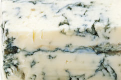 Gorgonzola  cheese Royalty Free Stock Image