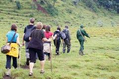 Gorila de montanha que Trekking Imagens de Stock Royalty Free