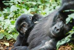 Gorila del bebé Fotografía de archivo