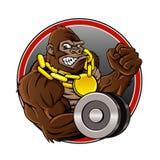 Gorila enojado con pesa de gimnasia y la cadena del oro Imágenes de archivo libres de regalías