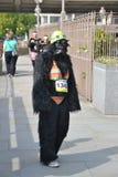 Gorila listo para nadar Fotos de archivo