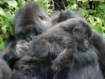 Gorila y gorila del bebé Imagen de archivo