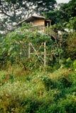 Gorilas de la vista del área Foto de archivo