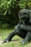 Gorilla stock fotografie