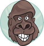 Gorilla ape Stock Image