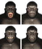 Gorilla Ape Face Expression Emotions-Illustration lokalisiert Lizenzfreies Stockbild