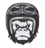 Gorilla Bikers Helmet Royaltyfria Bilder
