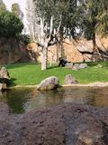 Gorilla in the Bio Park. Valencia, Spain Royalty Free Stock Photo
