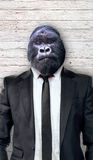 Gorilla in black suit, business concept Stock Photography