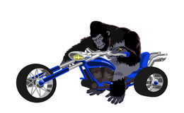 Gorilla on blue bike Royalty Free Stock Image