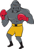 Gorilla Boxer Boxing Stance Cartoon. Illustration of a gorilla boxer in boxing stance viewed from front set on isolated white background done in cartoon style Royalty Free Stock Images