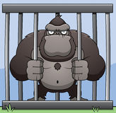Gorilla Cage Stock Photos