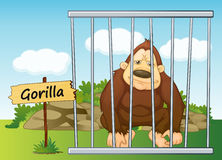 Gorilla in cage. Illustration of a gorilla in cage and wooden board Stock Photography