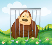 A gorilla in a cage Stock Photo