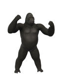 Gorilla chest thumping, monkey  on white background Royalty Free Stock Photography