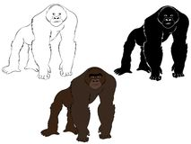 Gorilla in color, black and white and outline illustration vector illustration