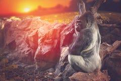 Gorilla, der auf einem Felsen sitzt Stockbilder