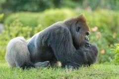 Gorilla, der auf Gras sitzt Stockfotografie