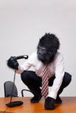 Gorilla on a desk picking up the phone. Royalty Free Stock Photo
