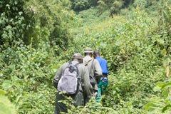 Gorilla di montagna che Trekking nella foresta Immagini Stock