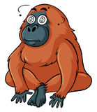 Gorilla with dizzy face Royalty Free Stock Image