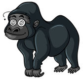 Gorilla with dizzy face Royalty Free Stock Photography