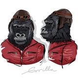 Gorilla Dressed en tant que pilote humain Photographie stock