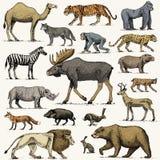 Gorilla, Elch- oder Eurasierelche, Kamel und Rotwild, Nashorn Hasen, Wolf und Bär mit Löwe und Tiger gravierten die gezeichnete H Lizenzfreies Stockfoto