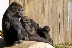 Gorilla-Familie Lizenzfreie Stockbilder