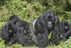 Gorilla-Familie stockbilder