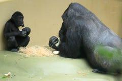 Gorilla family Royalty Free Stock Photos