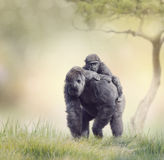 Gorilla Female with Her Baby Stock Images