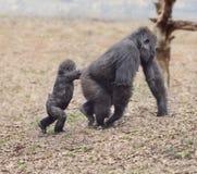 Gorilla Female mit ihrem Baby Lizenzfreie Stockfotografie