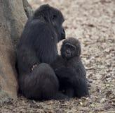 Gorilla Female und ein Baby Lizenzfreie Stockfotos