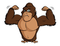 Gorilla flexing Stock Photography