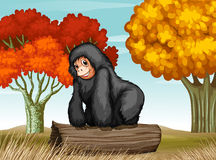 A gorilla at the forest Royalty Free Stock Image