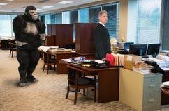 Gorilla, Geschäftslokal Stockfotos