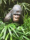 Gorilla in giungla fotografia stock libera da diritti