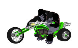 Gorilla on green bike Royalty Free Stock Images