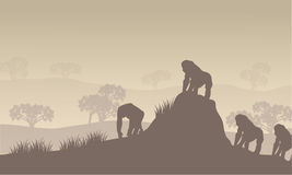 Gorilla group of silhouette in hills Stock Images