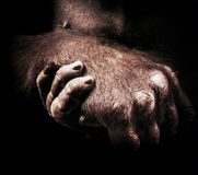 A gorilla Hand Royalty Free Stock Photo