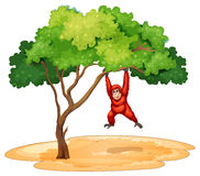 A gorilla hanging under the tree Stock Images