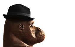 Gorilla in hat Stock Photo