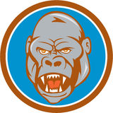 Gorilla Head Circle Cartoon arrabbiato Fotografia Stock