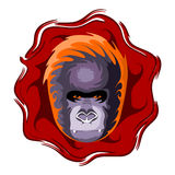 Gorilla head. Design vector illustration. Gorilla head. Design color vector illustration Stock Photography