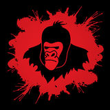 Gorilla Head. Designed on splash blood background graphic vector Royalty Free Stock Photo