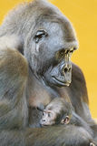 Gorilla with her young portrait Royalty Free Stock Photography