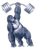 Gorilla holding weight Royalty Free Stock Photos