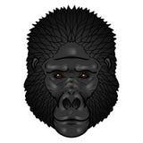 Gorilla hoofdgradiënten Geïsoleerdn op een wit Stock Foto